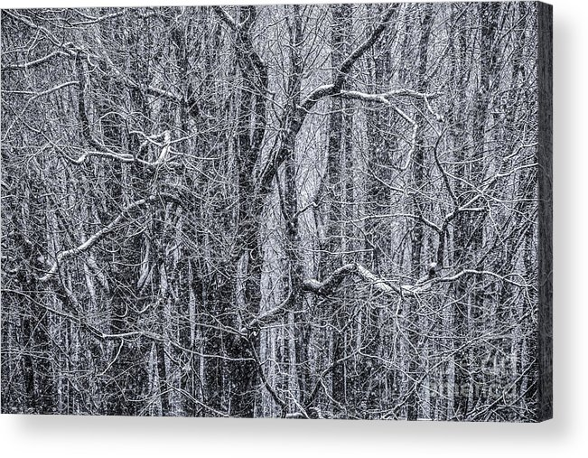 Snow Acrylic Print featuring the photograph Snow In The Forest by Diane Diederich