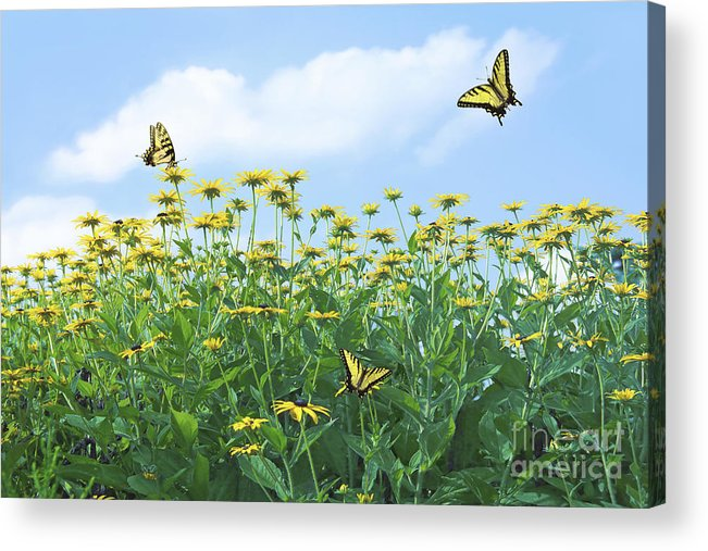 Spring Acrylic Print featuring the photograph Springtime by Diane Diederich