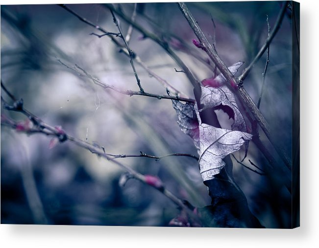 Torn Acrylic Print featuring the photograph Torn And Tattered by Shane Holsclaw