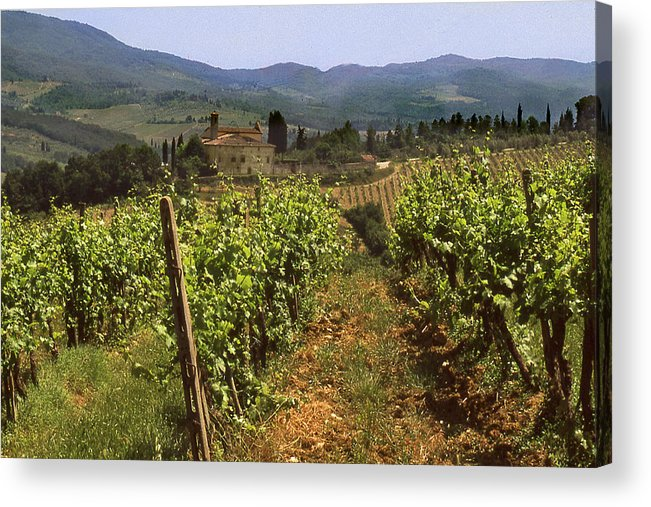Wine Acrylic Print featuring the photograph Tuscany Vineyard No.2 by Mel Felix