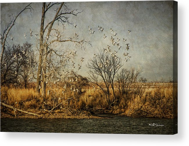 Ducks Acrylic Print featuring the photograph Up Up And Away by Jeff Swanson
