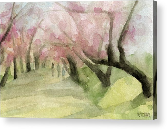 Cherry Blossoms Acrylic Print featuring the painting Watercolor Painting Of Cherry Blossom Trees In Central Park Nyc by Beverly Brown Prints