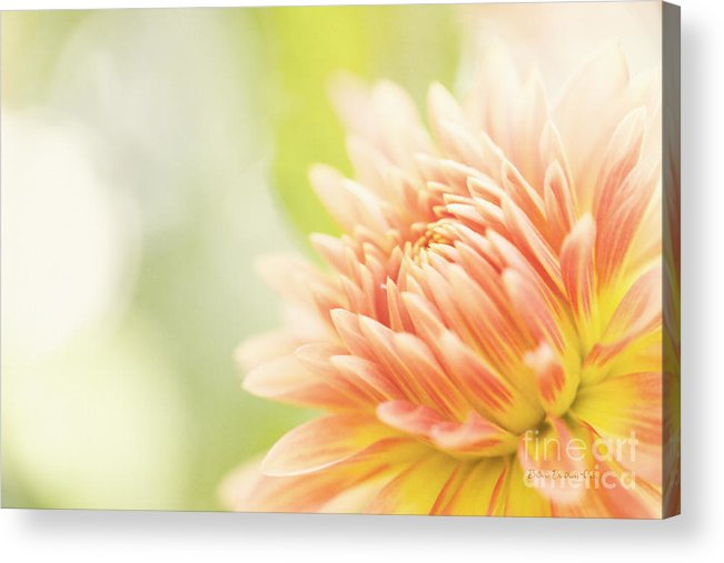 Dahlia Acrylic Print featuring the photograph When Summer Dreams by Beve Brown-Clark Photography