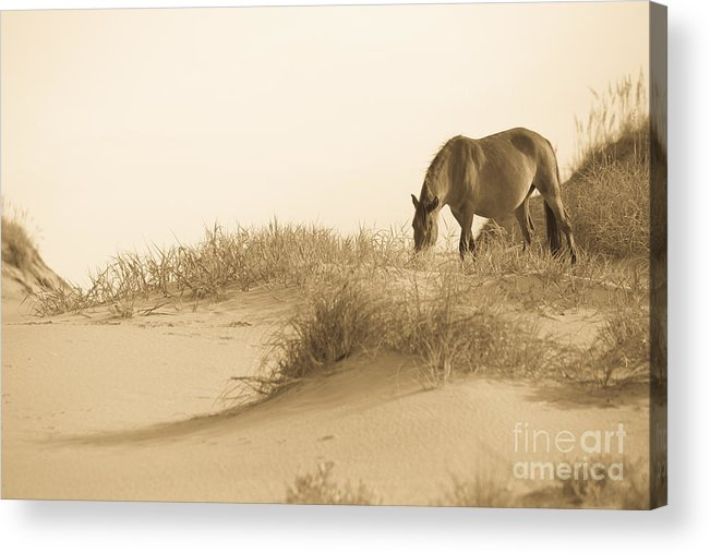 Horse Acrylic Print featuring the photograph Wild Horse by Diane Diederich