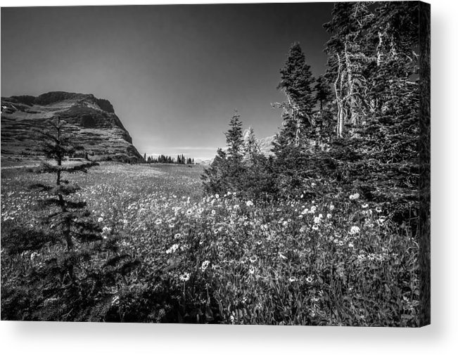 Glacier National Park Acrylic Print featuring the photograph Wild Mountain Flowers Glacier National Park by Rich Franco