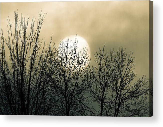 Winter Acrylic Print featuring the photograph Winter Into Spring by Bob Orsillo