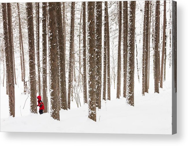 north Woods Snow snowy Woods winter Woods duluth lake Superior Winter fresh Snow greeting Cards amity Woods lester Park child In Landscape childhood Wonder winter Wonderland Acrylic Print featuring the photograph Winter Frolic by Mary Amerman