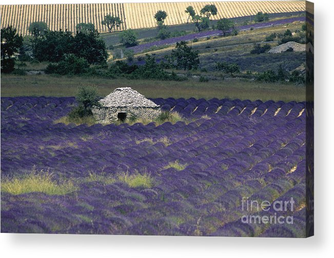 Touristic Acrylic Print featuring the photograph Field Of Lavender. Sault by Bernard Jaubert