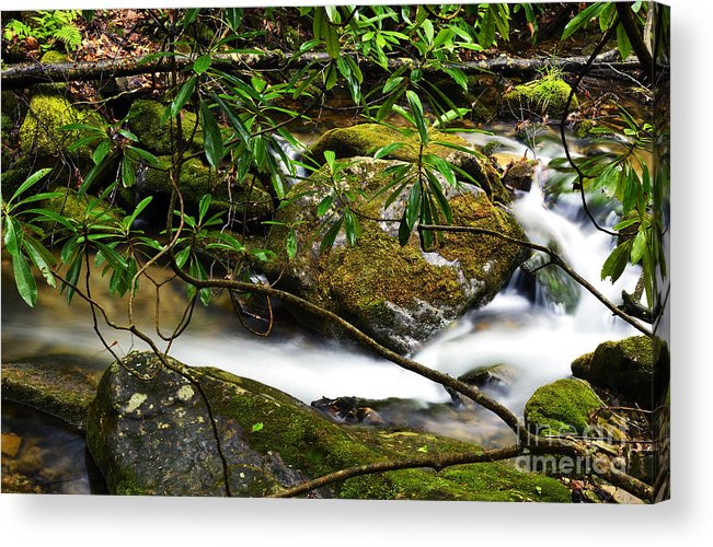Rushing Mountain Stream Acrylic Print featuring the photograph Rhododendron And Waterfall by Thomas R Fletcher