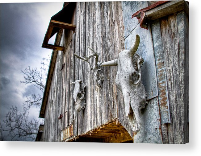 Cow Acrylic Print featuring the photograph Barnstorm by Pixel Perfect by Michael Moore