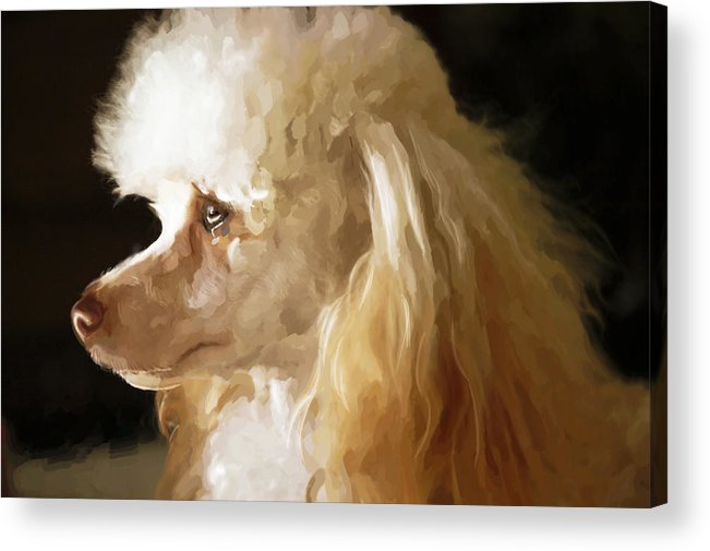 Dogs Acrylic Print featuring the digital art Bella by Mickey Clausen