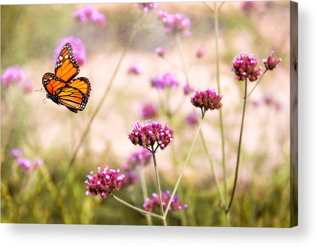 Monarch Acrylic Print featuring the photograph Butterfly - Monarach - The Sweet Life by Mike Savad