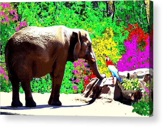 Elephant Acrylic Print featuring the photograph Elephant-parrot Dialogue by Rom Galicia