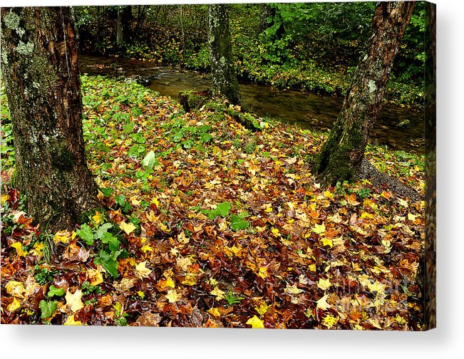 Williams River Acrylic Print featuring the photograph Fall Along Middle Fork by Thomas R Fletcher