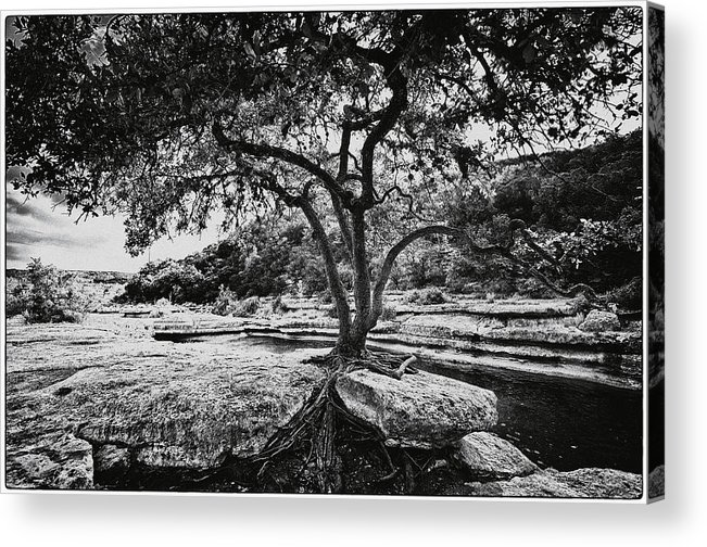 Still Life Acrylic Print featuring the photograph Grown Into The Rock by Lisa Spencer