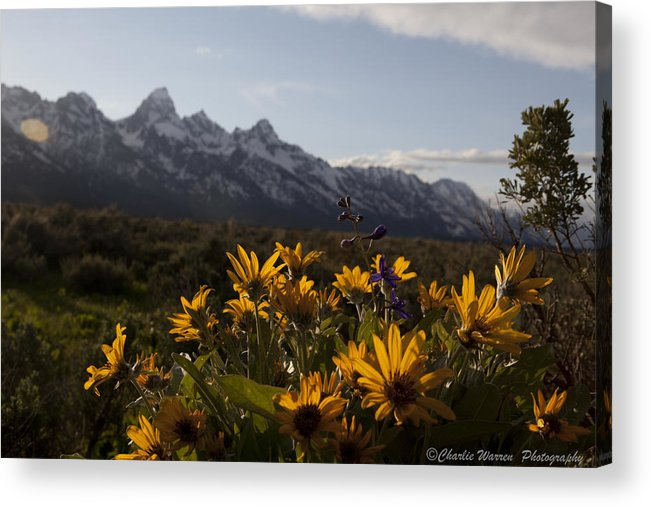 Flowers Acrylic Print featuring the photograph Mountain Flowers by Charles Warren