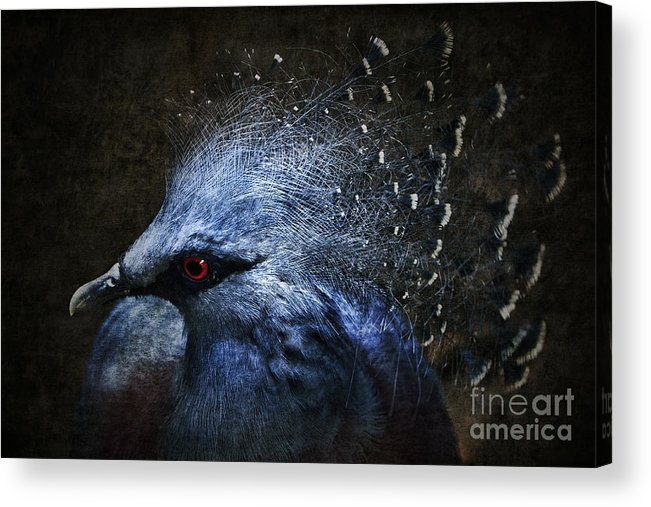 Photomanipulation Acrylic Print featuring the photograph Ornamental Nature by Andrew Paranavitana