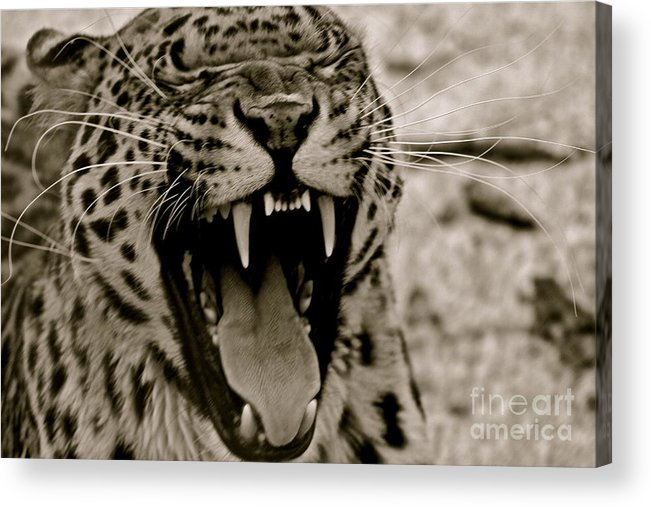 Sepia Acrylic Print featuring the photograph Protecting The Young by Eric Chapman