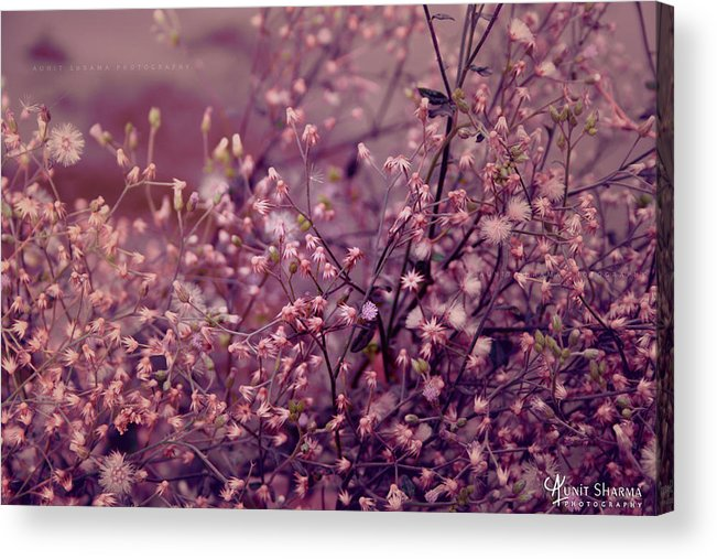 Green Acrylic Print featuring the photograph Summer by Aunit Sharma