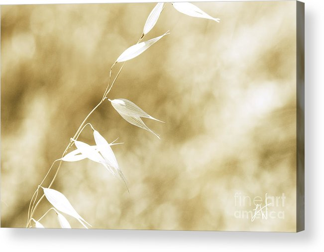 Summer Wheat Acrylic Print featuring the photograph Summer Grass by Artist and Photographer Laura Wrede