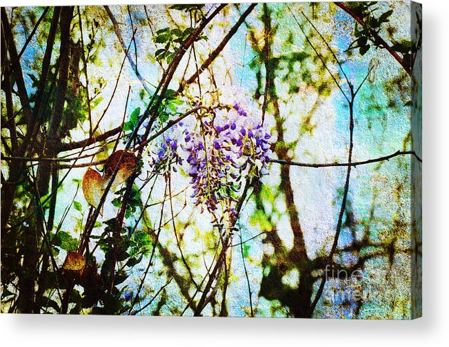Wisteria Acrylic Print featuring the photograph Tangled Wisteria by Andee Design
