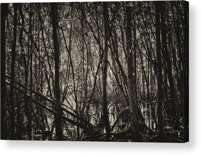 Mangrove Forest Acrylic Print featuring the photograph The Mangrove by Armando Perez