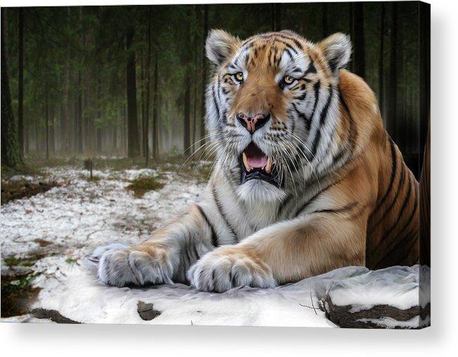 Tj Acrylic Print featuring the digital art TJ by Big Cat Rescue