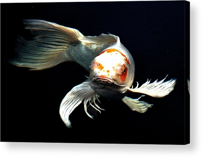 Koi Acrylic Print featuring the digital art What You Doin Up There by Don Mann