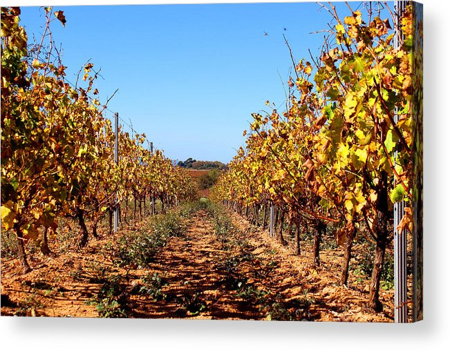 Colours Acrylic Print featuring the photograph Autumn Vines by K McCoy