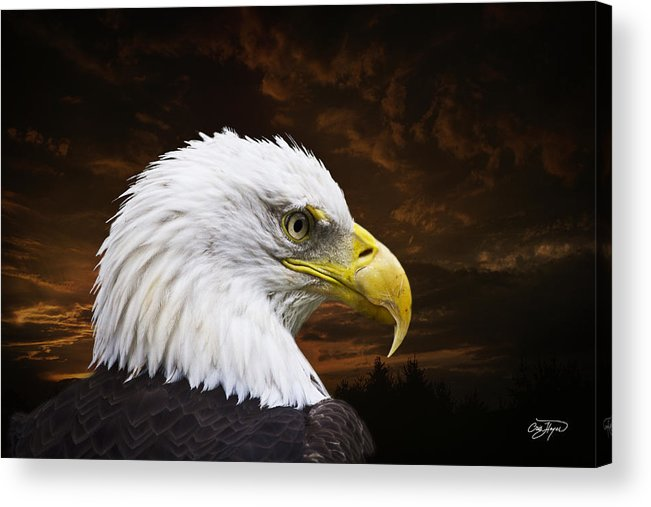 Eagle Acrylic Print featuring the photograph Bald Eagle - Freedom And Hope - Artist Cris Hayes by Cris Hayes