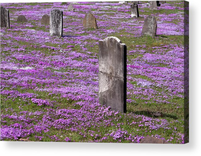 Tombstone Acrylic Print featuring the photograph Colonial Tombstones Amidst Graveyard Phlox by John Stephens