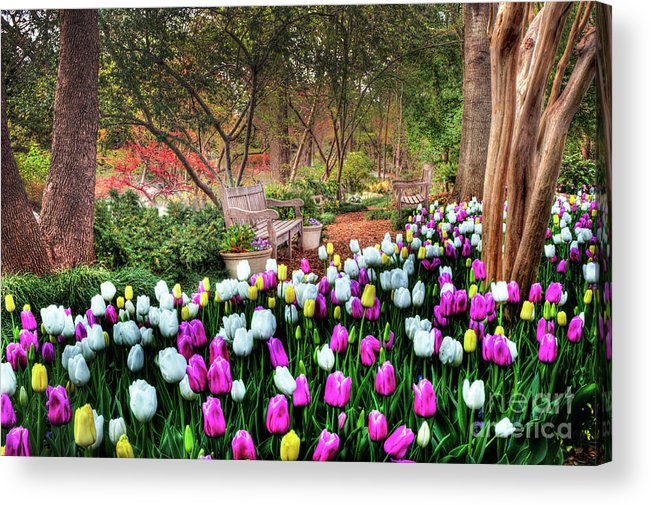 Tulip Acrylic Print featuring the photograph Dallas Arboretum by Tamyra Ayles