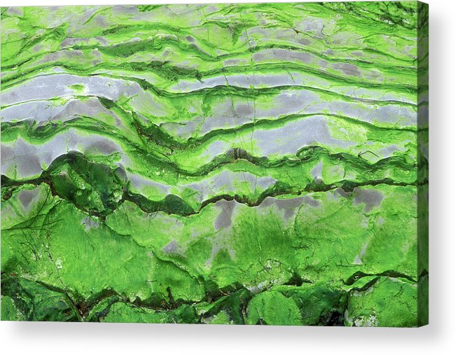 Horizontal Acrylic Print featuring the photograph Green Algae Patterns On Exposed Rock At Low Tide, Gros Morne National Park, Ontario, Canada by Altrendo Nature