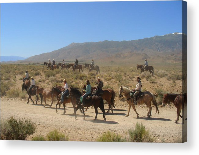 Horses Acrylic Print featuring the photograph Horse Drive From June Lake To Bishop California by Christine Till