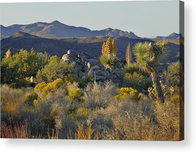 Sunset Acrylic Print featuring the photograph Joshua Tree National Park In California by Christine Till