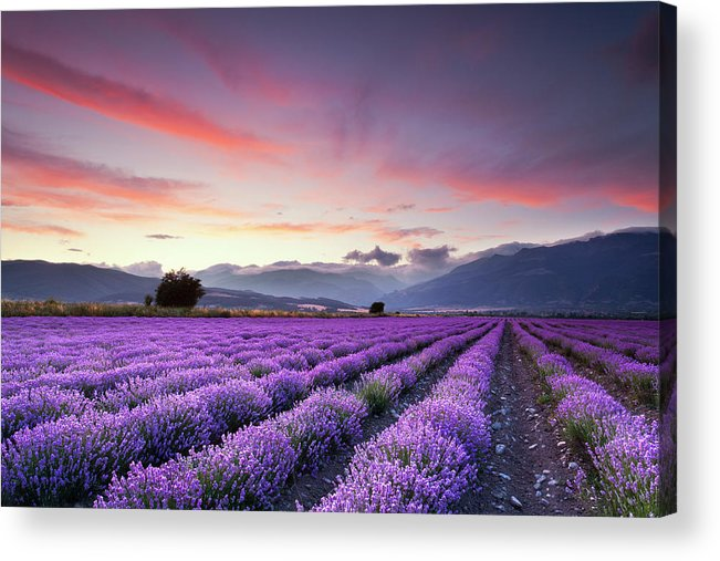 Dusk Acrylic Print featuring the photograph Lavender Season by Evgeni Dinev