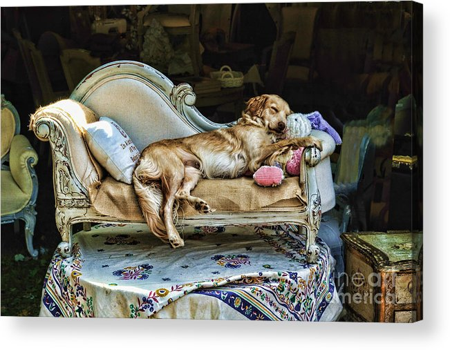 Dog Acrylic Print featuring the photograph Nap Time by Edward Sobuta