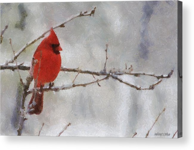Bird Acrylic Print featuring the painting Red Bird Of Winter by Jeff Kolker