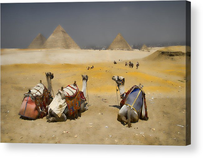 Egypt Acrylic Print featuring the photograph Scenic View Of The Giza Pyramids With Sitting Camels by David Smith