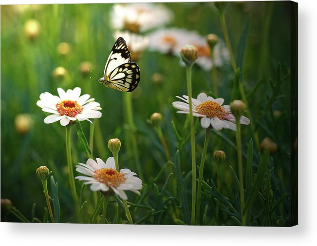Horizontal Acrylic Print featuring the photograph Spring In Air. by Photos by Shmelly