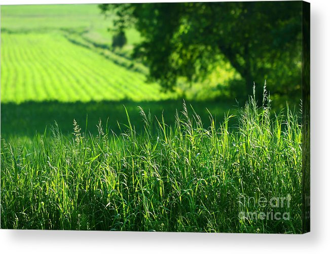 Agricultural Acrylic Print featuring the digital art Summer Fields Of Green by Sandra Cunningham