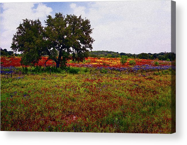 Texas Acrylic Print featuring the photograph Texas Wildflowers by Tamyra Ayles