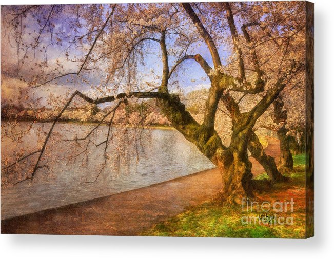 Trees Acrylic Print featuring the photograph The Cherry Blossom Festival by Lois Bryan