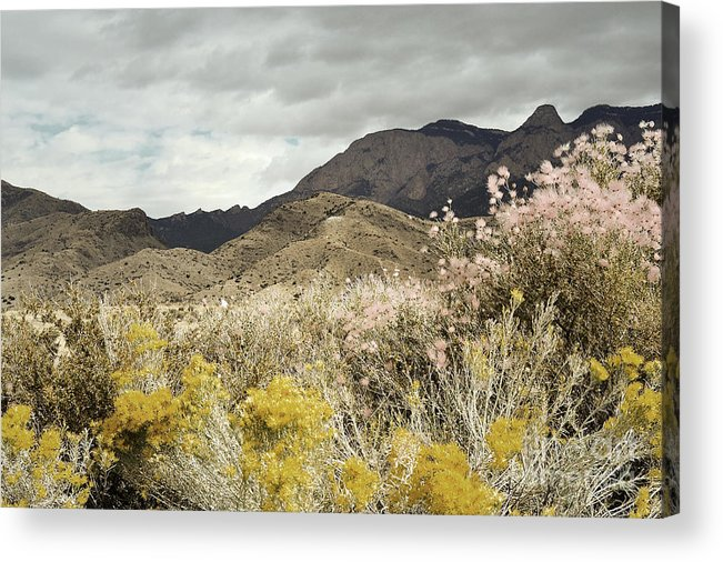 Sandia Mountains Acrylic Print featuring the photograph Wildflower Mountain by Andrea Hazel Ihlefeld