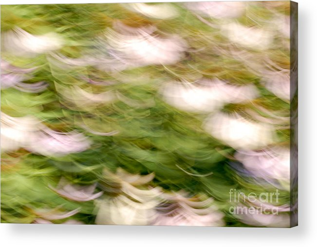 Blurred Motion Acrylic Print featuring the photograph Coneflowers In The Breeze by Paul W Faust - Impressions of Light