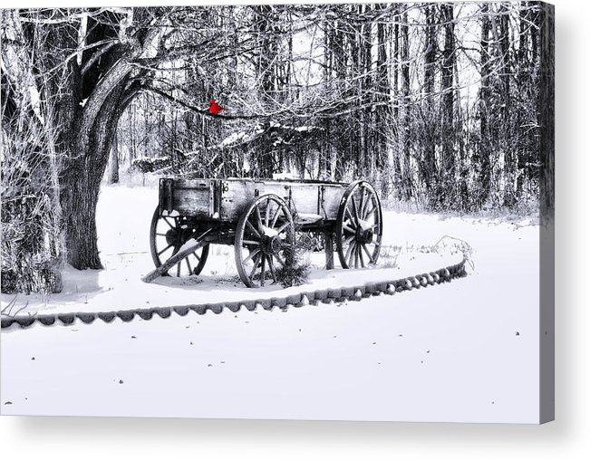Winter Scene. Winter Landscape. Snow Landscape. Black And White. Birds Acrylic Print featuring the photograph Snow Bound by Mary Timman