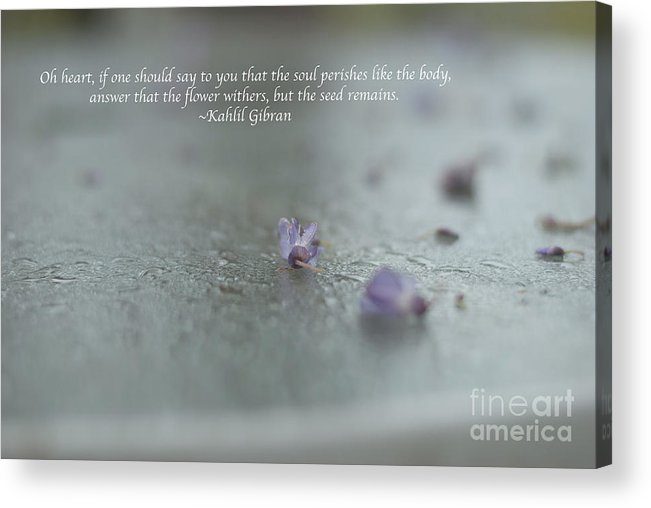 Kahlil Gibran Acrylic Print featuring the photograph The Seed by Barbara Shallue