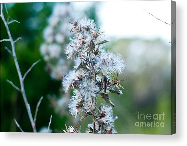 Autumn Acrylic Print featuring the photograph Transition 2 by Barbara Shallue