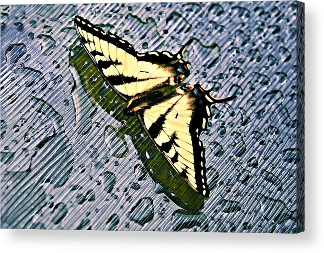 Nature Acrylic Print featuring the photograph Butterfly In Rain by Susan Leggett