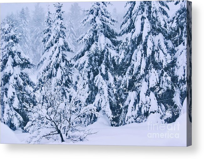 winter Prints Acrylic Print featuring the photograph Winter Coat by Aimelle